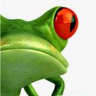 Cyberfrog Design Ltd